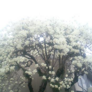 2016-04-03_11.06.36.jpg